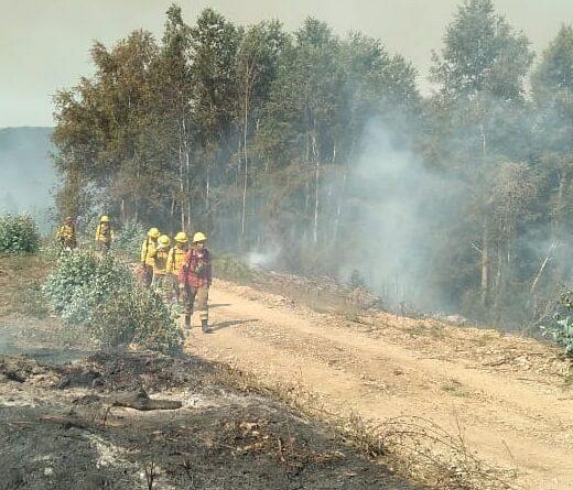 Incendio forestal en cerros Manquimávida y Caracol alcanza Reserva Nonguén afectando hectáreas de bosque nativo