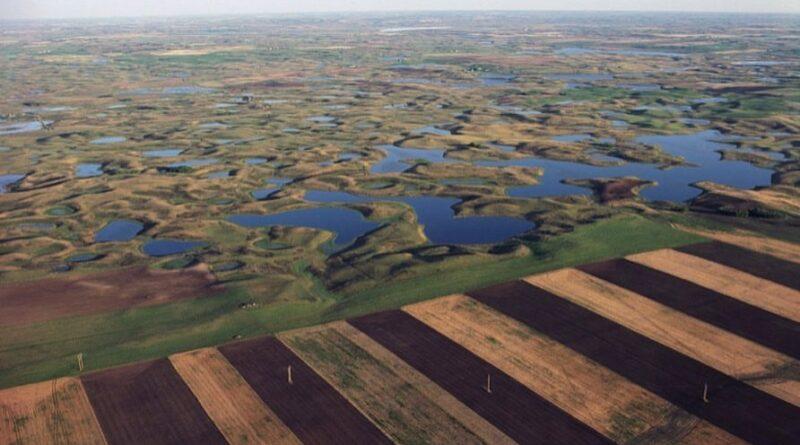 Trump elimina protección ambiental para arroyos y humedales