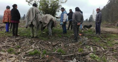 [Comunicado] Chol Chol:Comunidad Ramón Painemal reafirma recuperación territorial