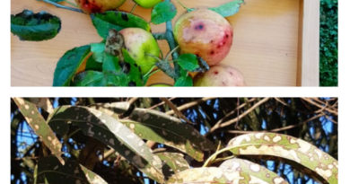 """""""De los pesticidas al racismo e injusticia socio ambiental en Wallmapu: las otras formas de exterminar la vida"""""""