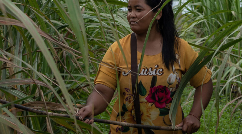 En portada: Mujer afectada por las concesiones otorgada a la empresa azucarera Koh Kong en Camboya. Foto de Andrew Ball/Panos/Global Witness.